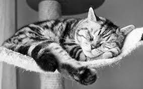 Mindfulness meditation for sleeping