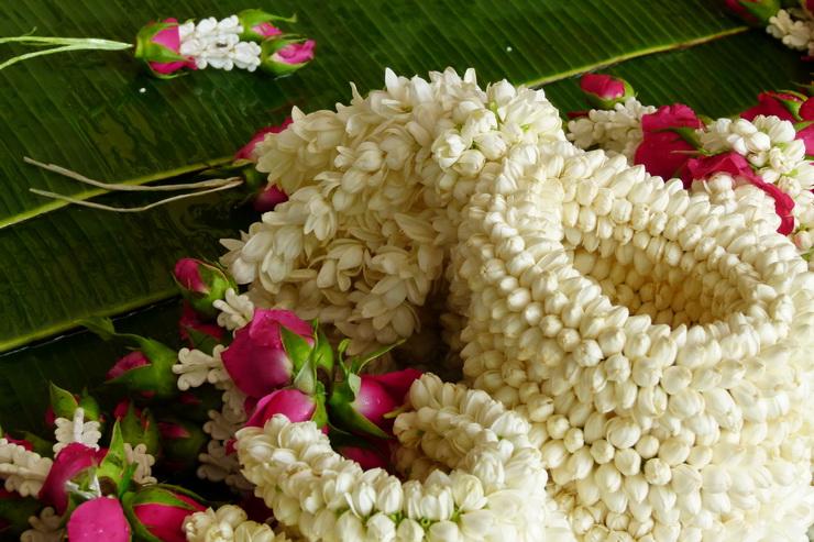 What is Thai Jasmine?